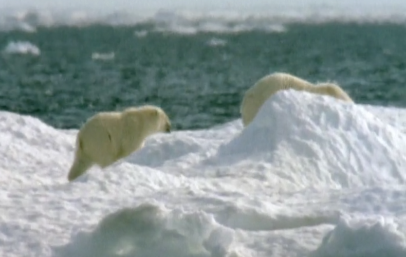 2000 BBC TV  Nature Special Warnings from the Wild.