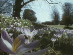 1990 BBC TV Horizon – The Britannic Greenhouse
