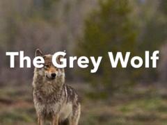 The Grey Wolf – Mashup