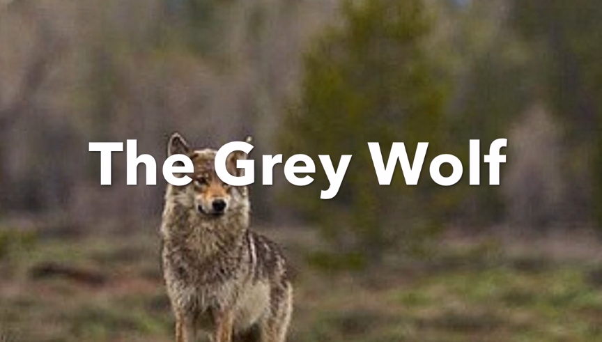 The Grey Wolf – Mashup
